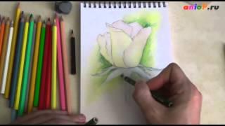 Мастер класс по рисованию розы акварельными карандашами(Мастер класс по рисованию розы акварельными карандашами http://aniop.ru/mk-roza/, 2014-10-06T05:15:21.000Z)
