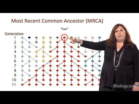 Sarah Tishkoff (U. Pennsylvania) Part 1: African Genomics: Human Evolution
