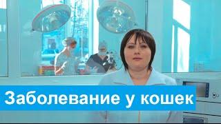Гипертрофическая кардиомиопатия.  Заболевание у кошек.
