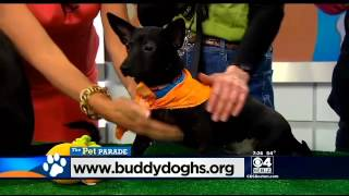Pet Parade: Buddy Dog Humane Society