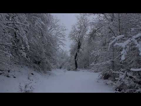 AZERBAIJAN - Amazing Winter View of Forest.