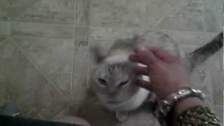 Totally Random video. This is my favorite pet at work. =)