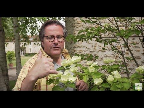 Exclu visite guid e des jardins truffaut en mai for Jardinerie des jardins