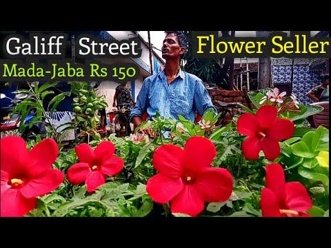 Kolkata Flower Market At Galiff Street Visit And Price Update The Largest Flower Market In India