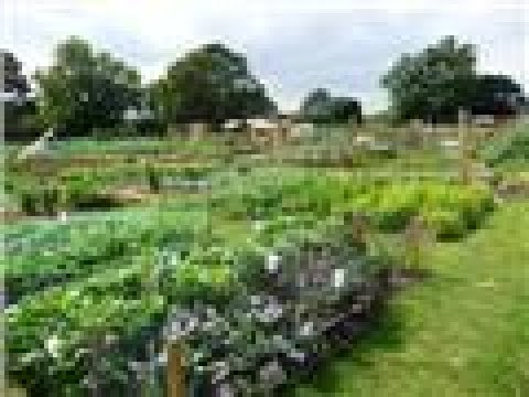 Boroughbridge Allotment Society 11th April 2017 Kids Playing, Chickens, Planting, Dog Walking