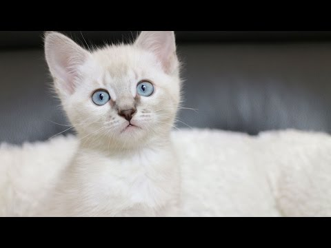 Top 10 Things You Didn't Know About Kittens