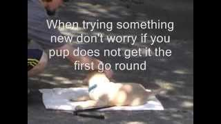Clicker Training A Puppy 101,  Dog Training At Home