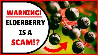 Is Elderberry Syrup The Best Immune System Supplement... Or A Scam? Answer May Surprise You!