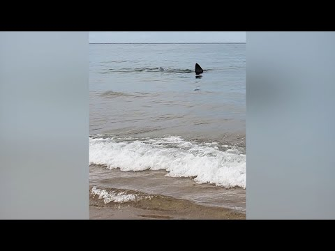 Video: Shark seen swimming very close to shore of Cape Cod beach