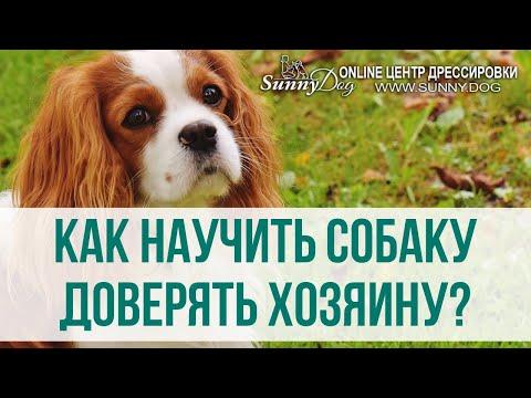 Вопрос: Как завоевать любовь собаки?