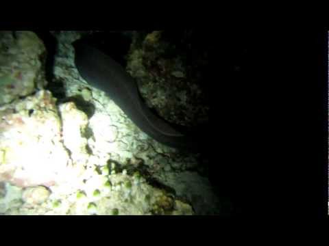 Maldives 2013 - Eel looking for food [Canon SX230 Underwater 1080p HD]