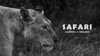 Safári na África do Sul   Limppopo + Kruguer   Largados no Mundão