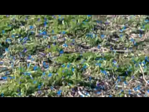 Los pibes de General Lagos tarde de caza de liebre