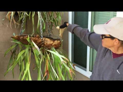 Succulent Landscape Rehabilitation