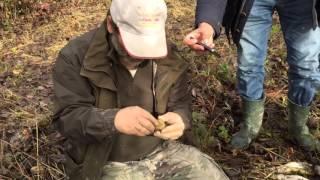 Охота на трюфели в Пьемонте(, 2015-10-31T20:48:49.000Z)