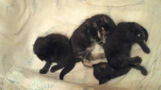 14 день. 1-й час ночи. А котята не спят!