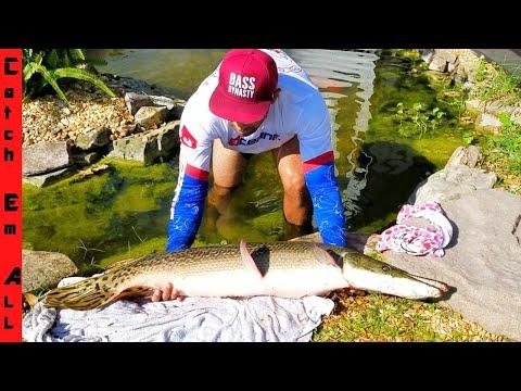 CATCHING PET GIANT Florida GAR FISH!
