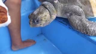 Спасение черепахи/turtle Rescue