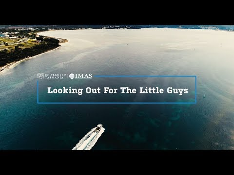 Looking Out For The Little Guys - IMAS Fisheries Research