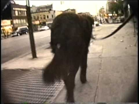 A Sunrise Dog Walk with Blackout in 1986