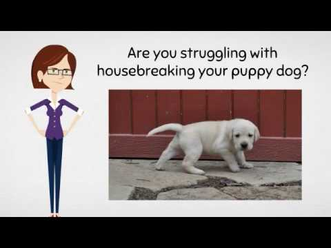 housebreak-a-puppy-in-7-days-in-2017---housebreaking-your-puppy-dog-today