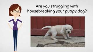 Housebreak a puppy In 7 Days In 2017 - Housebreaking Your Puppy Dog Today
