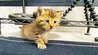 保護した子猫が大冒険をしていたら・・・