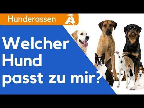 Hund kaufen / Welche Hunderasse passt zu mir? / Darauf kommt es an!