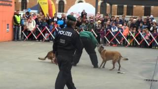 Zwei Polizeihunde gegen einen mit einer Pistole bewaffneten Person. Es Fallen Schüße!