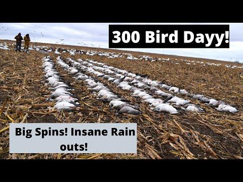 INSANE SNOW GOOSE HUNT ! BIG SPINS} 300 Bird Shoot!!!