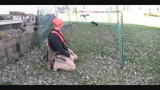 Puppy Retrieving Training Tip By Pointer Supply