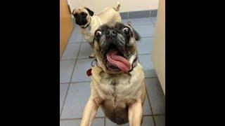 funny dog fails and being stupid :D