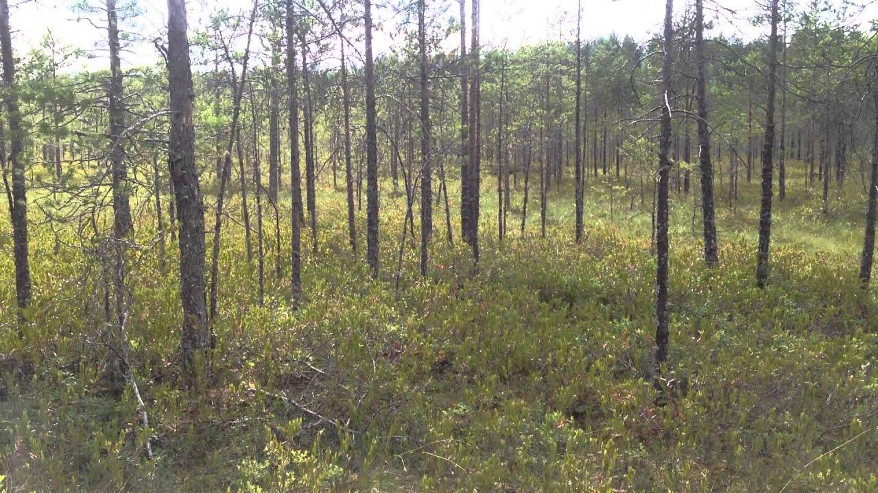 великое болото фото вологодская область часто