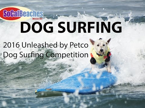 2016 Unleashed by Petco DOG SURFING Competition