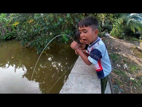 Adit Panas Saat Mamet Strike Ikan Gabus Besar