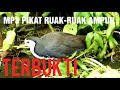 Suara Burung Ruak Ruak Penarik  Mp3 - Mp4 Download