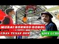 Edan Tenan Bos Murai Borneo Dobol Semakin Edan Pasca Mabung  Mp3 - Mp4 Download