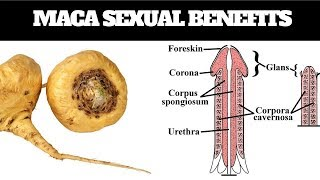 Why Maca is Good for Men, Miracle Benefits of Maca for Male Enhancement