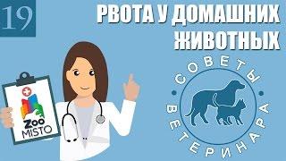 Рвота у домашних животных | Причины рвоты у питомцев | Виды и помощь при рвоте | Советы Ветеринара