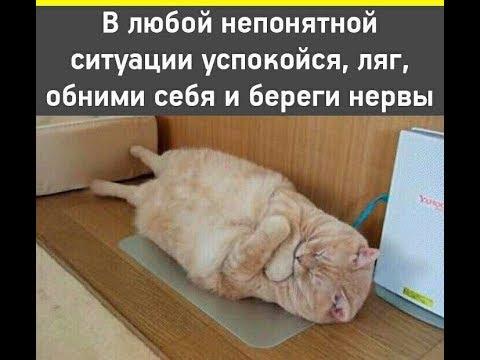 Подборка фото приколов из Whatsapp # 1