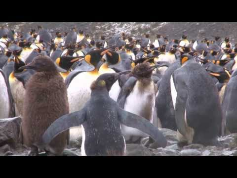The Elysium Shackleton Antarctic Visual Epic Movie