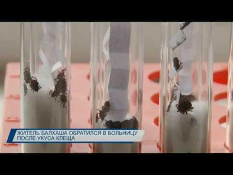 Житель Балхаша обратился в больницу после укуса клеща