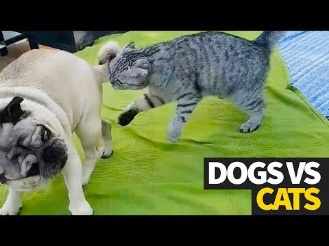 The Ultimate Dog vs Cat Viral Video Compilation | WHO WILL WIN?!