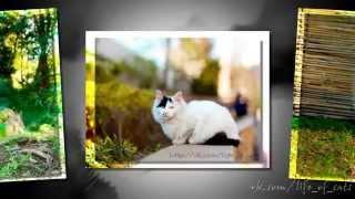 """Фото Кошек. Слайд шоу фото кошек """"Кошки #4"""""""