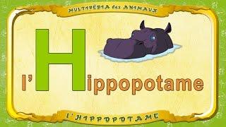 Multipédia des animaux - La lettre H - l