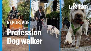 « Dog walker» , un métier en plein boom