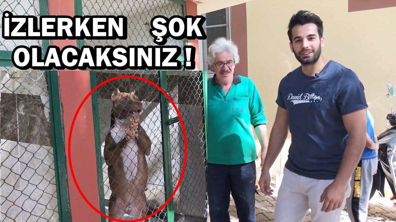 BARINAKTA Kİ PİTBULL'U GÖRÜNCE ŞOK OLACAKSINIZ !!!