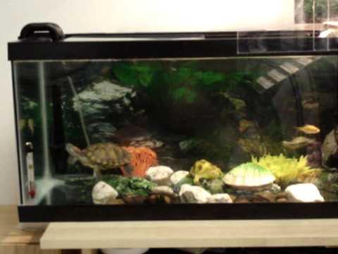 New Red Eared Sliders aquarium YouTube