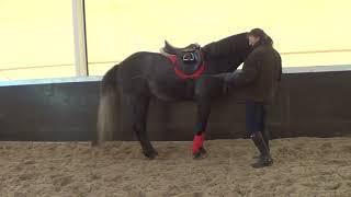 Выездка лошади. Остановки в руках.