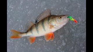 Первая осеняя подледная ПОЛОСАТАЯ рыбалка 26 10 2020 Коми Печорский район